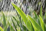 Saurer Regen